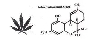 Tetrahydra